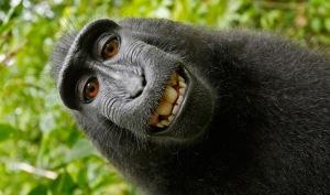 monkey-selfie-thumbnail